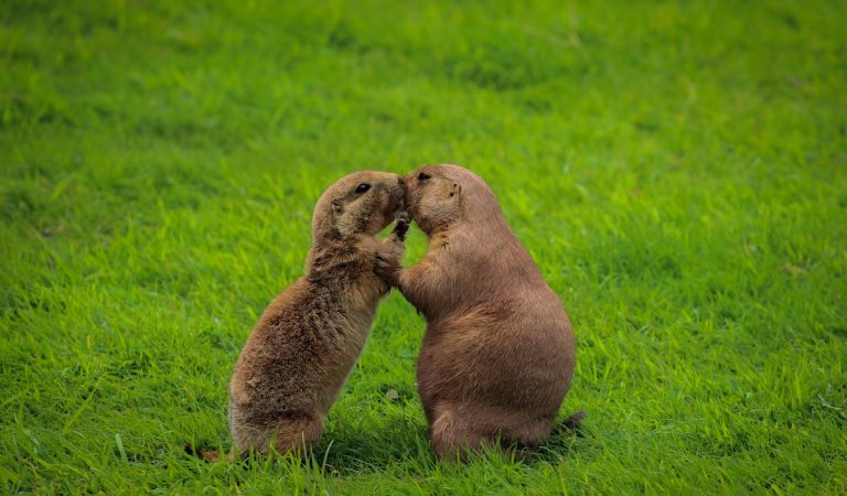 What's the Difference Between Gophers and Groundhogs?